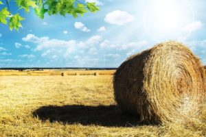Darowizna gospodarstwa rolnego